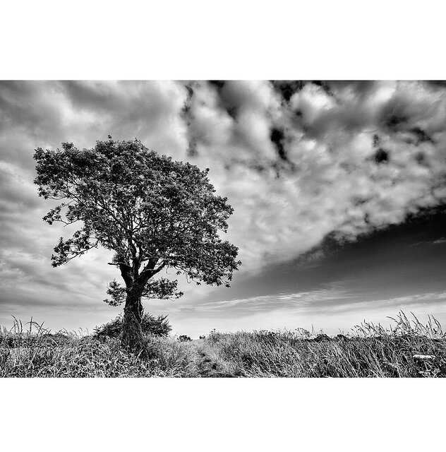 Lone Trees - I'd forgotten about this thread until I saw it pop up in New Posts. Here is one I took in Norfolk a few weeks ago.