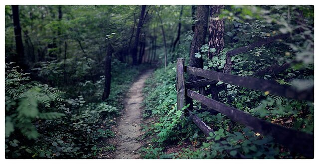 SHOW Paths, Tracks and Roads - FUJI XE2 + TTARTISAN 50mm f1.2 APSC