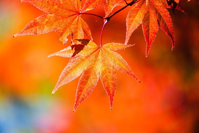 Signs of Fall.