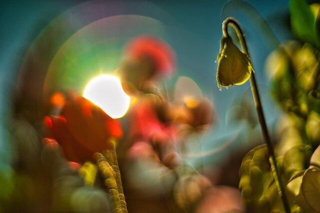 "Show ""Flowers"""