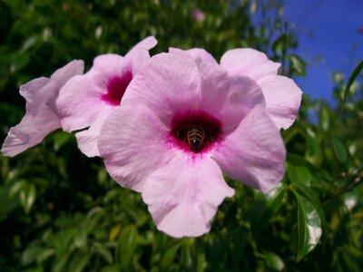 flower bee ii.jpg