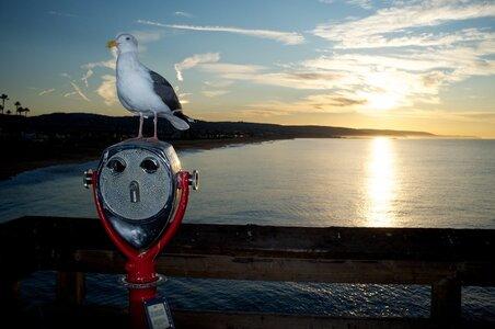 Gull2.jpg