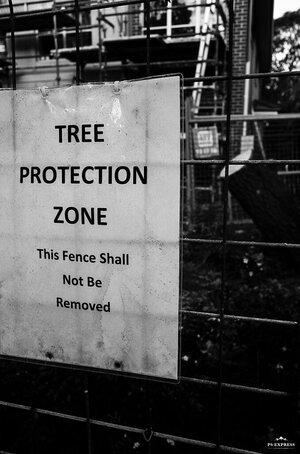 Tree Protection.jpg