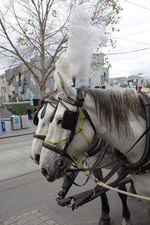 white_horses.jpg