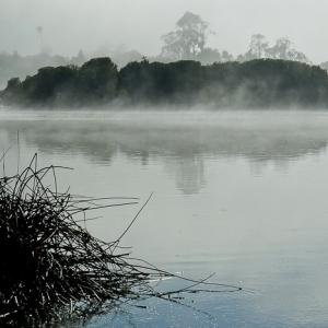 Mist in the Bird Sanctuary Santa Barbara