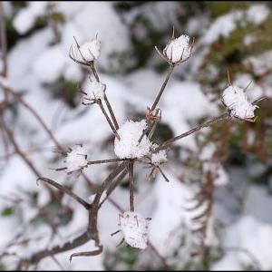 winters flowers