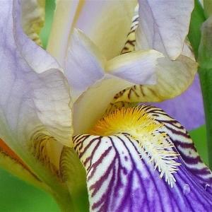 FZ200_flowers_012_Medium_