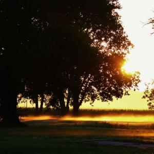 Sunrise in the park