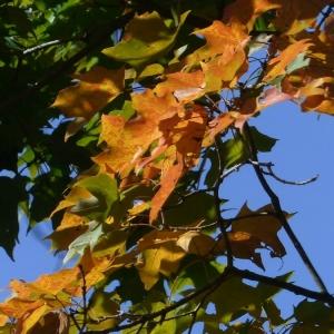 FZ200_fall_leaves_birds_011-001