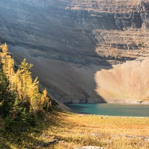Alpine larch and Forum Lake