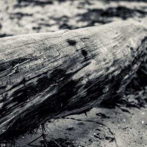 SiJ 1 Log on the beach