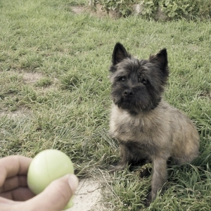 SiJ15 - Day Two - Focus of Fetch