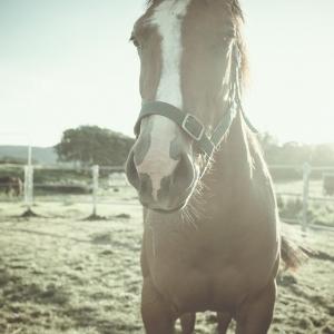 SiJ15 - Day Three - A foal no more
