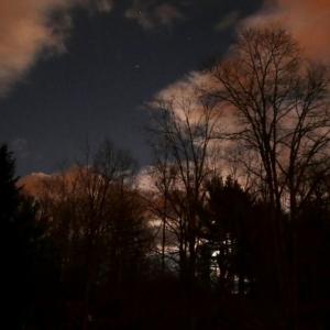 LX100_moonlight_in_the_trees_003-001_Medium_