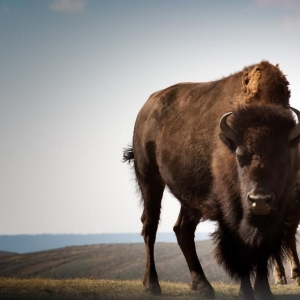 Yellowstone National Park USA