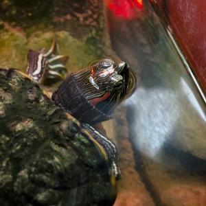 SIJ 24 Turtle Time