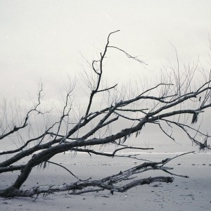 SiJ 3 Beach Tree Copy