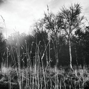 SiJ 2017 Day 15 - The Common Wood