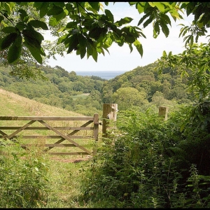 The gate to Hedgelands field