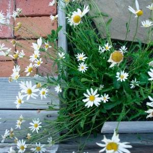 SIJ15 ~ mondrian's garden, perhaps?