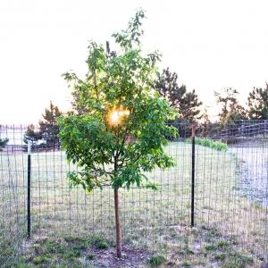 SIJ29 ~ burning bush....