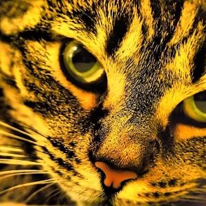 Olympus E-P3 Dramatic Tone Cat