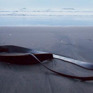 Surf, sand, seaweed
