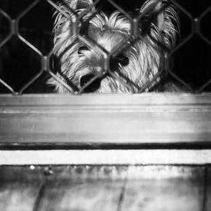 SIJ 01 - Let me in