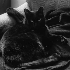 Black cat on a black blanket