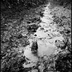 SIJ - Day 08 Deep in a Devon lane