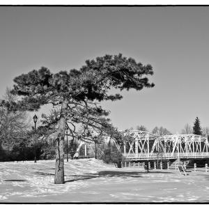 Tree and bridge