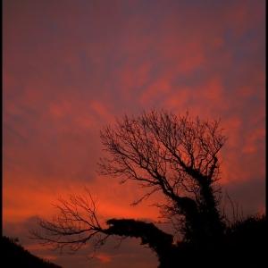 SIJ - Day 17  Fiery Tree