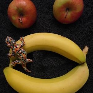 SIJ 24 - revenge of the fruits