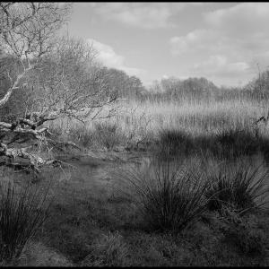 Corner of the marsh