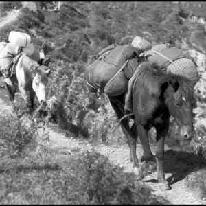 Ponies carrying our kit