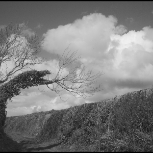 Windblown tree and cloud