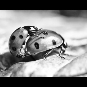 Naughty Ladybirds