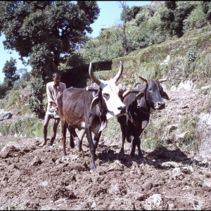 Ploughing a terrace