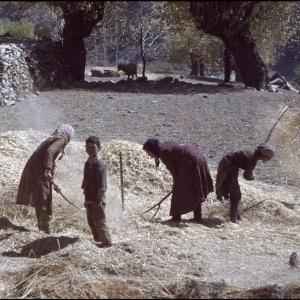 Winnowing the threshed grain