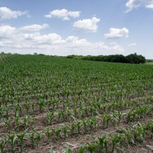 corn powah!