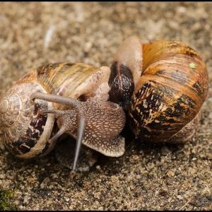 Passionate snails