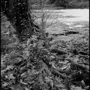 Bankside roots