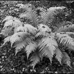 Fern and fallen leaves