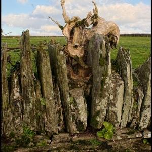 wooden skull?