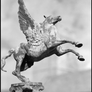 Pegasus-St Werburghs