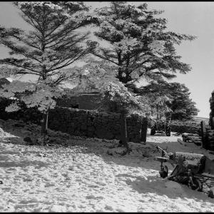 Trolsworthy Warren Farm-Dartmoor