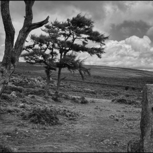 The gate to the moor