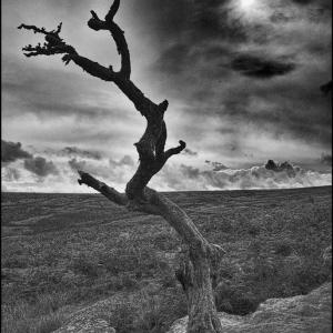Dead tree/noonday sun