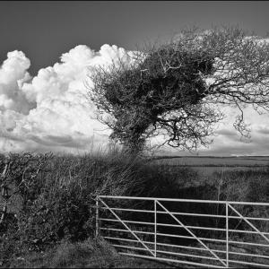 Distant shower cloud