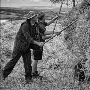 Young and old pitching the sheaves